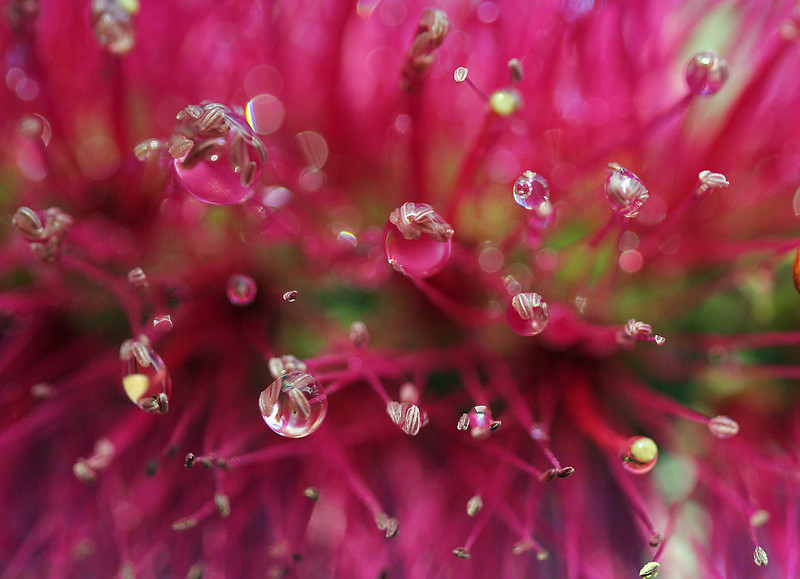 8998 Bottle Brush Drops