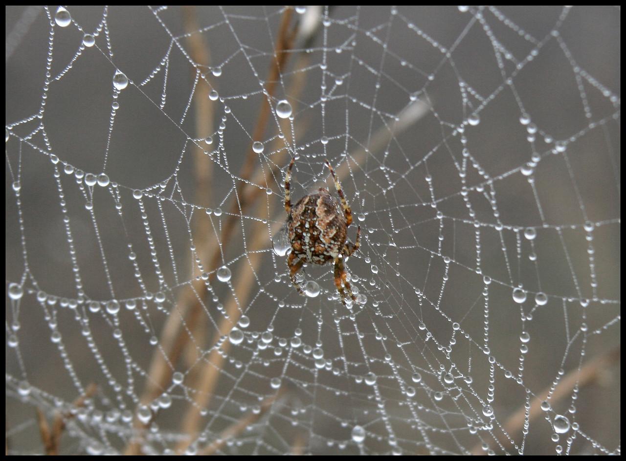 7605 Spider Web Drops