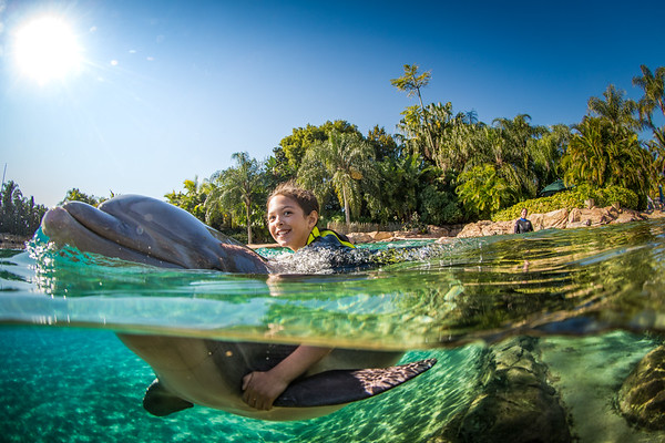 Girl getting dolphin ride.