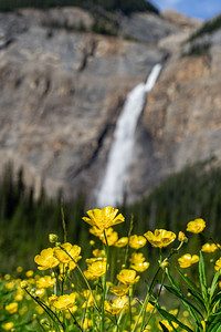 Overflowing Buttercup