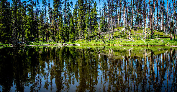 """""""Can't See The Lake For The Trees""""  Tall pines cast their magical reflection upon Eleanor Lake in Yellowstone National Park in Wyoming."""