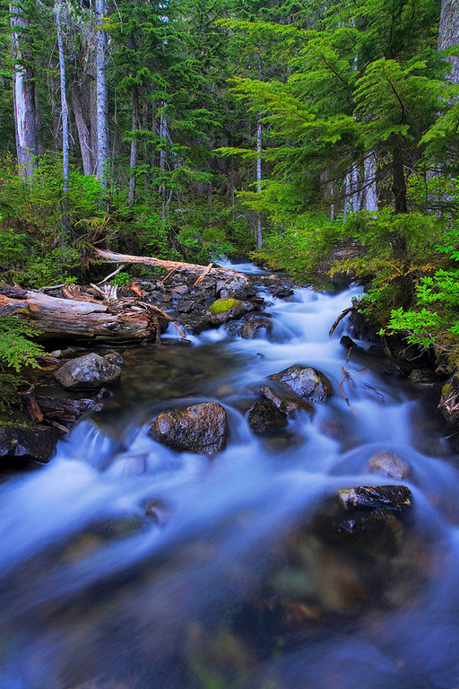 Mowich Lake Area Mt. Rainier National Park, WA