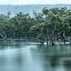 Mangrove Flow