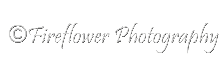 Fireflower Photography