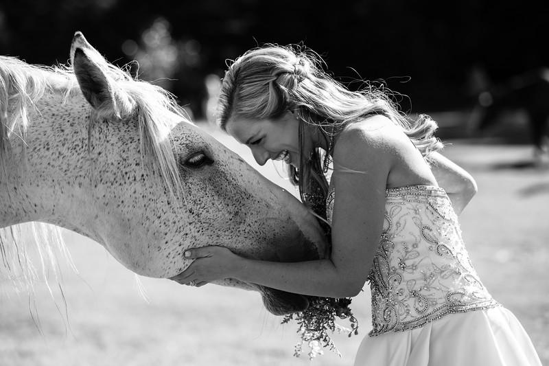 bridge and white horse wedding photo