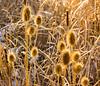 Winter Flowers: Walden Ponds Trail