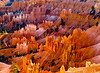 Bryce Canyon: Queen's Garden/Navajo Trail