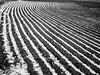 Spring Snow on Plowed Field