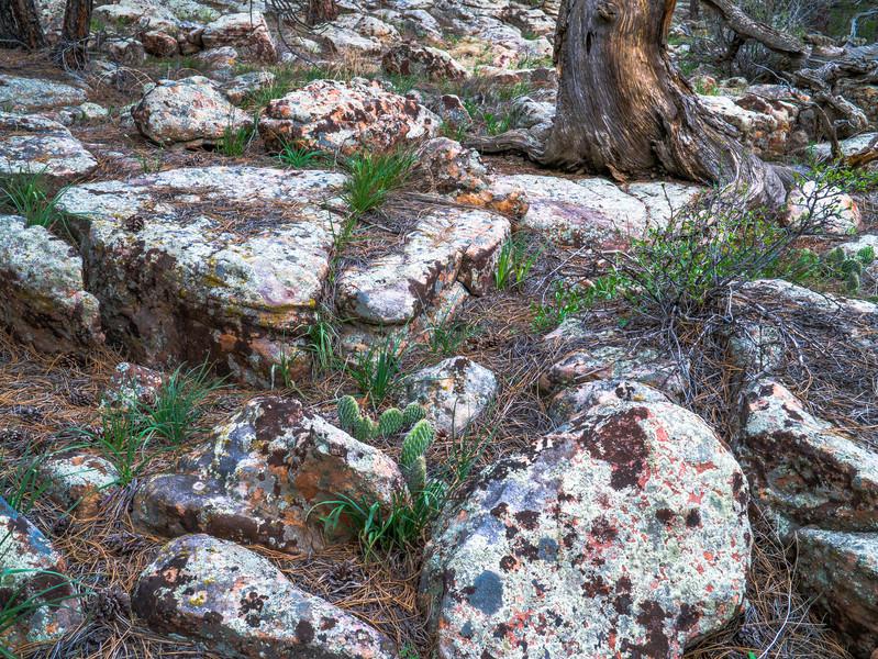 Rabbit Mountain, Boulder County