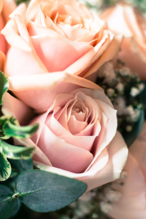 Bridal roses