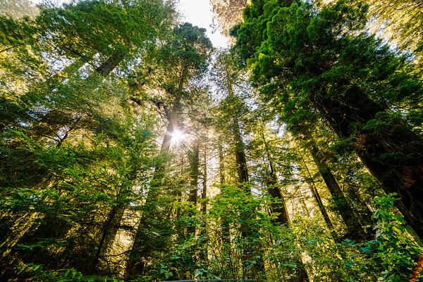 Redwoods Sky Me O' My