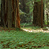 Green Green Redwoods Cloverfield 2