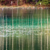 Plitvice Lakes, reeds and reflections
