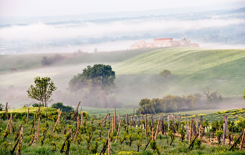 Foggy morning, Umbrian countryside