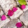 Obidos, fallen petals
