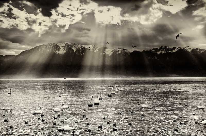 Lausanne, Switzerland, sun breaking over swans on Lake Geneva