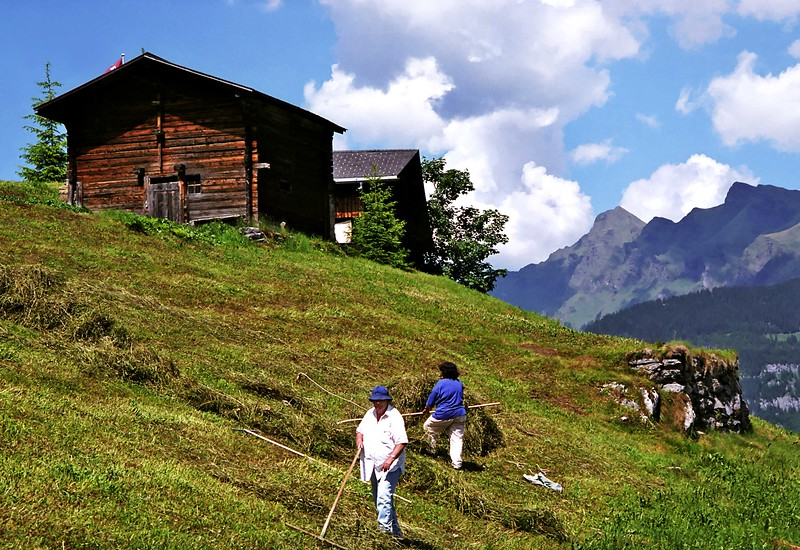 Baling hay near Gimmelwald