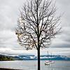 Tree and boats, Lake Geneva
