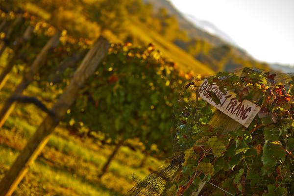 """Fall's Harvest"" Crane Creek Vineyards (Photo: Kelly J. Owen)"