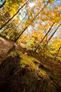 Mossy Trail (Photo: Kelly J. Owen) 2011