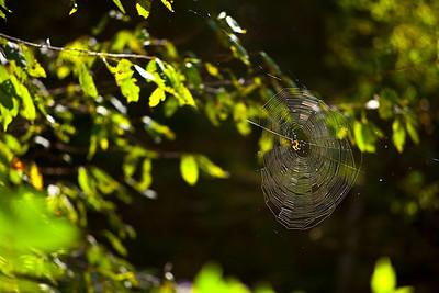 """Web 8.0"" Sweetwater, North Carolina (Photo: Kelly J. Owen)"