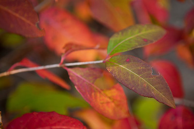 Fall Colors of the Gorge (Photo: Kelly J. Owen) 2011