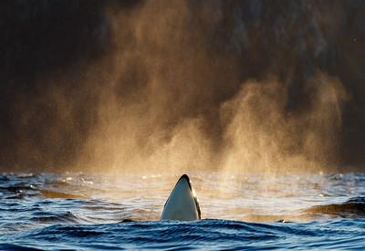 Spy whale