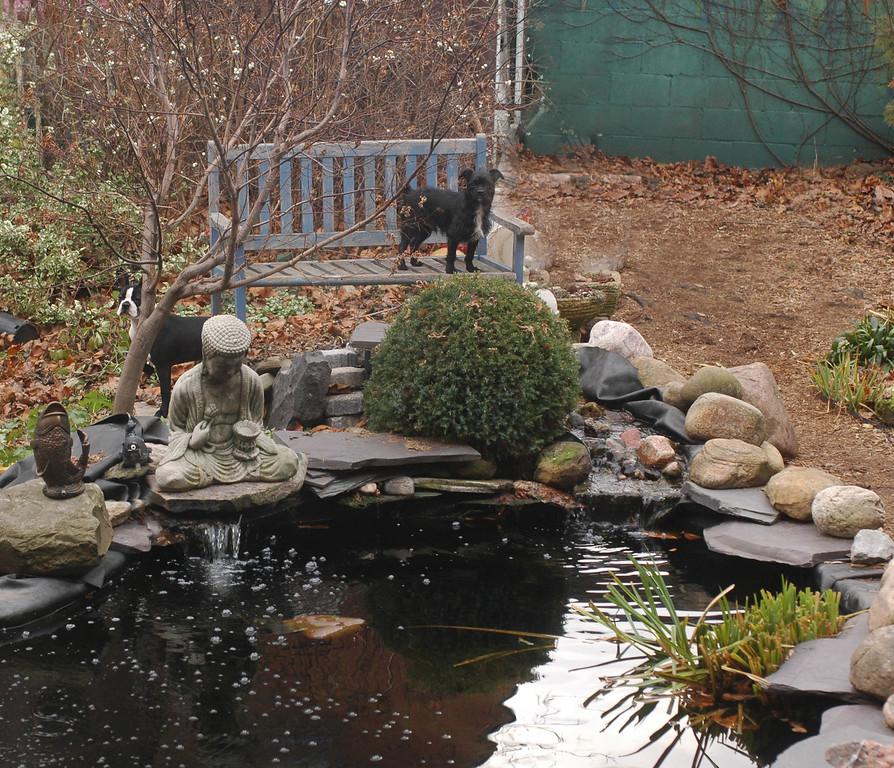 backyard today Dec 3/06, Monty and Poppy