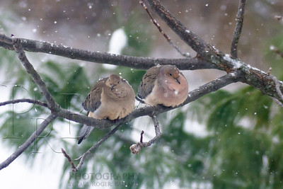 A Pair in the Snow
