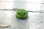 Morning Frog