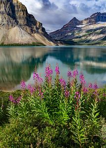 Fireweed and Glacier Basin