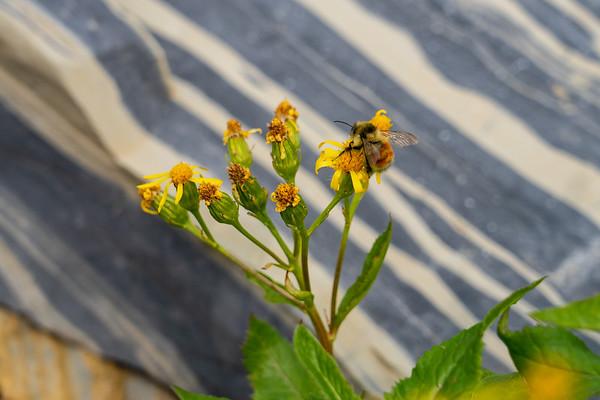 Autumn Busy Bee