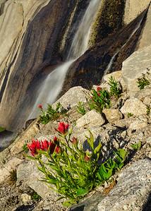 Waterfall Paintbrush