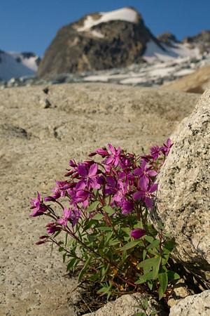 River Beauty, Granite and Glacier