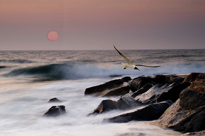 Seagull, Surf and Sunrise