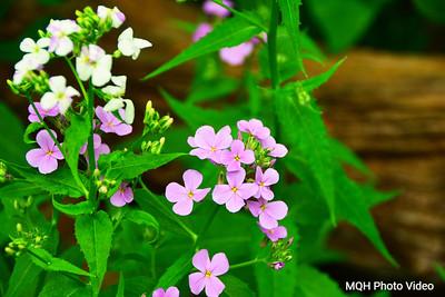 Spring Wild Flowers Closeup