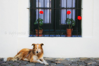 Dreaming Street Dog
