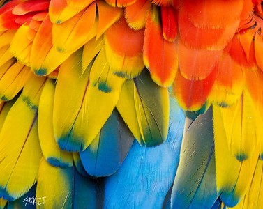 Macaw colors
