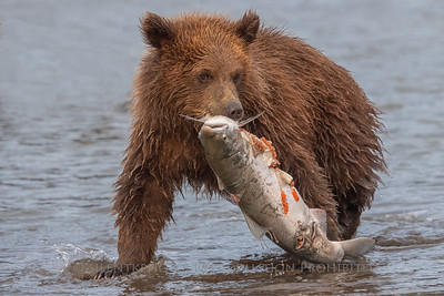 Cub with Dinner