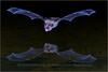 Pallet Bat - Reflection
