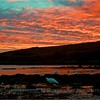 Sunset at Carcass Island, Falklands