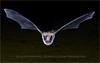 Pallet Bat - Forbes Pond, AZ