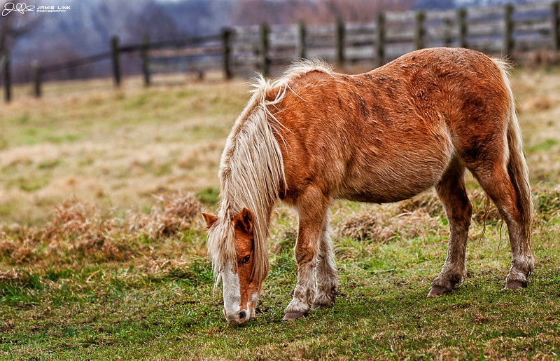 Grazing Horse<br /> <br /> The light reflected so perfectly off this horse as he grazed away on a cold November afternoon....