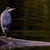 Esquimalt lagoon, Victoria, BC<br /> Camera: Pentax K-5 / Lens: A*1200/8