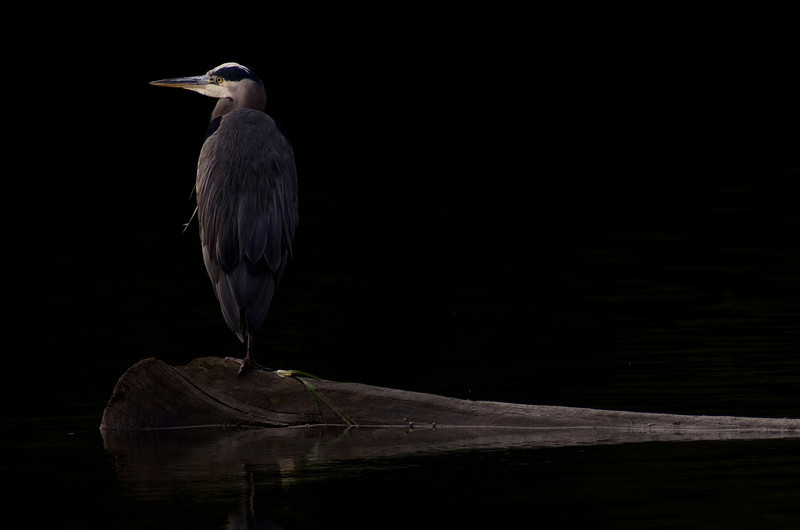 Esquimalt Lagoon, Victoria, British Columbia<br /> Camera: Pentax K-5 / Lens: A*1200/8