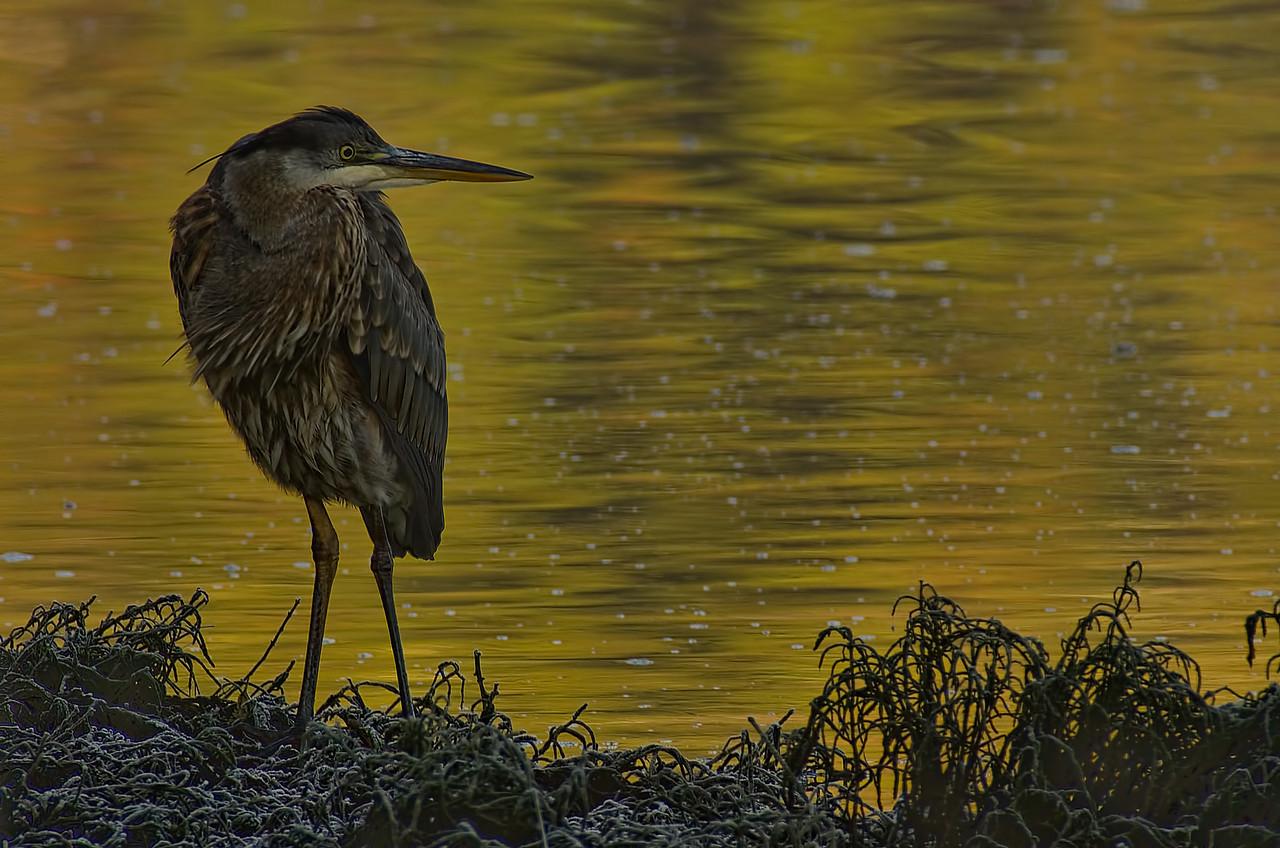 Goldstream, Victoria, British Columbia<br /> Camera: K-5 / Lens: A*1200/8