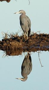 Bird_3820