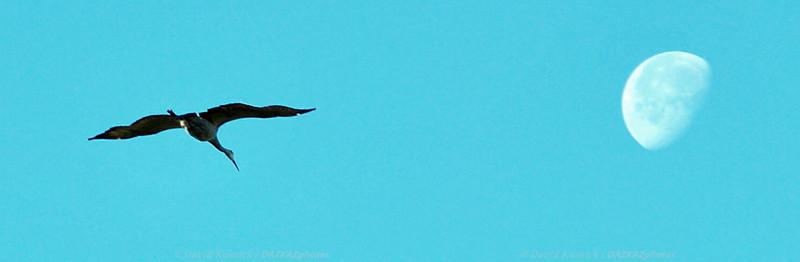 Sandhill Crane - Jasper Pulaski Wildlife Refuge, IN