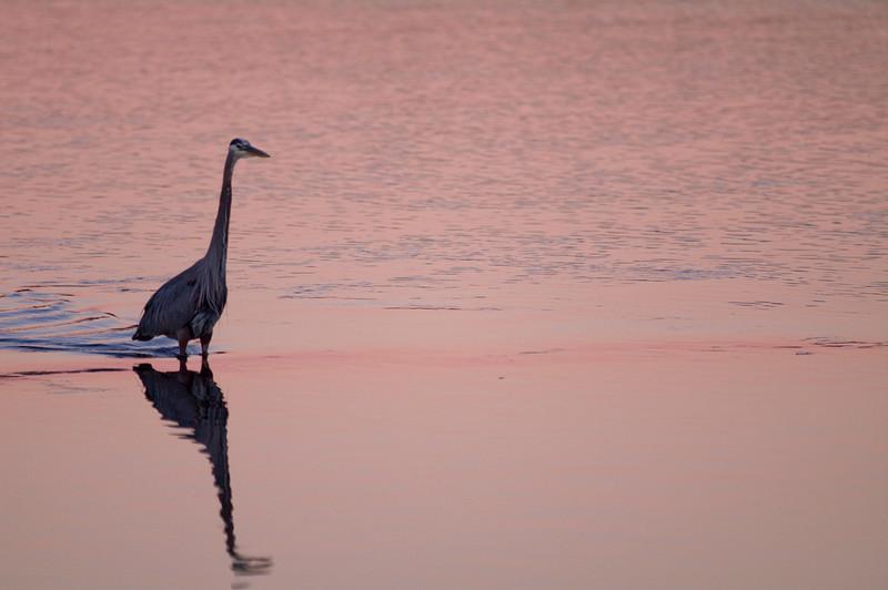 Esquimalt lagoon, Victoria, BC<br /> Camera: Pentax K-7 / Lens: A*300/2.8