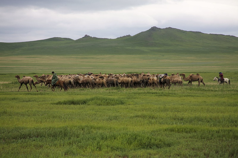 Mongolian Camel Herders  - Photo by Tristan Bayer